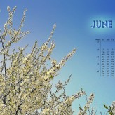June Youth Calendar